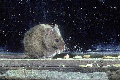 Mice climb beds